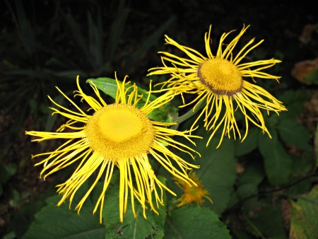 [photo of yellow spindly flowers]
