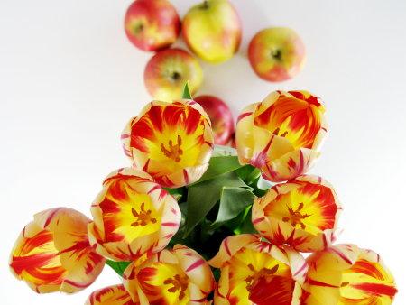 tulpen_appels.jpg