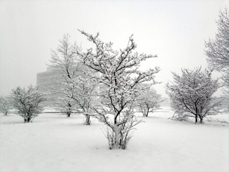 [photo of snowy trees]